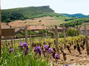 Vignes-Pouilly-fuisse